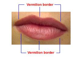 vermilion border of lip