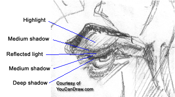 can you see the primitive form in the brow bone over the eye